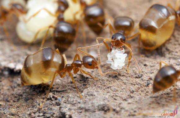 شركه مكافحه النمل الابيض بالدمام-0531500133