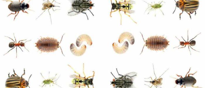 الصراصير وازعاجها لستات البيوت